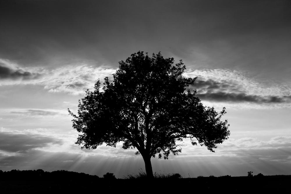 Tree Silhouette | Image via Deposit Photos