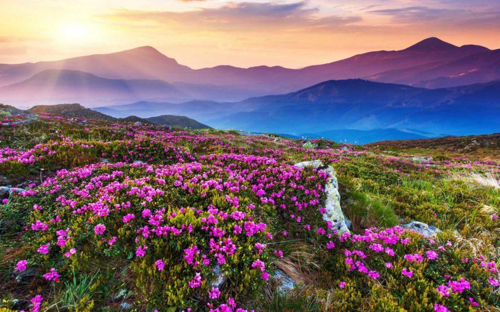 Valley of Flowers, India | Image via trekngo.com