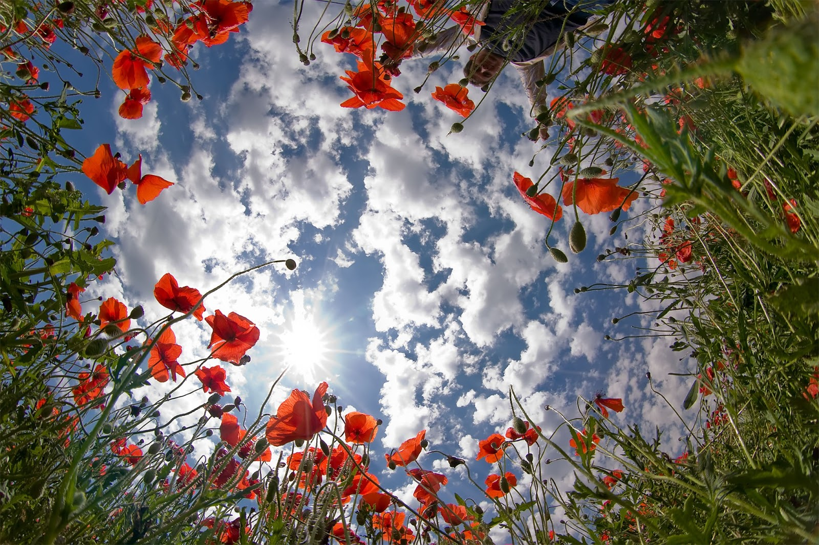 flower_photography_fisheye_lens